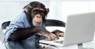 scimmia.jpeg